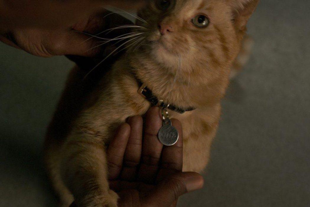 Es interpretado por cuatro gatos