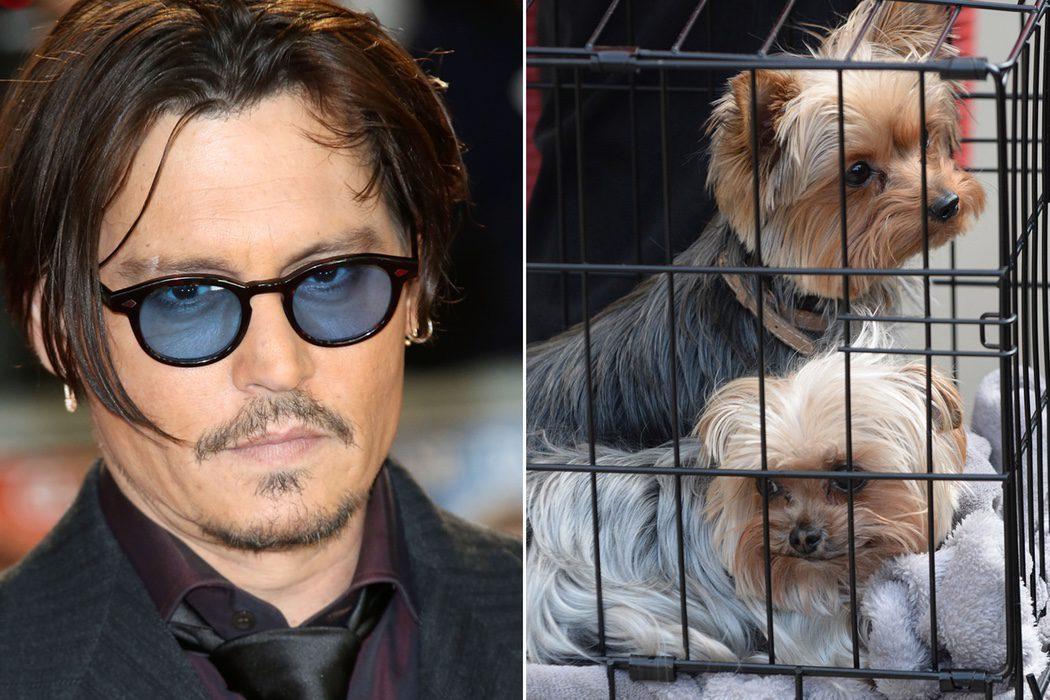 La cuestión canina