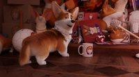 Tráiler español latino 'Corgi, las mascotas de la reina'